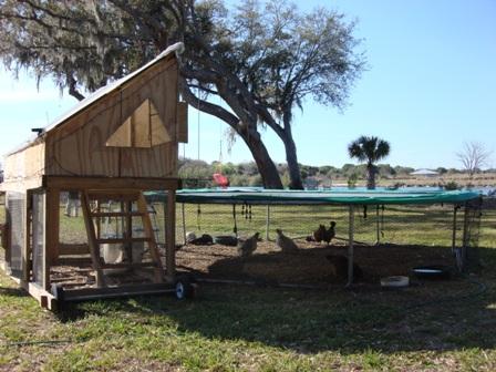 chicken-tractor-trampoline.jpg