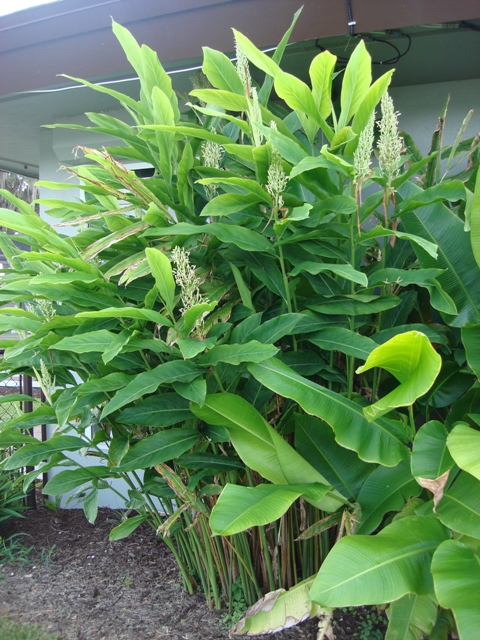 Granny Plant 35