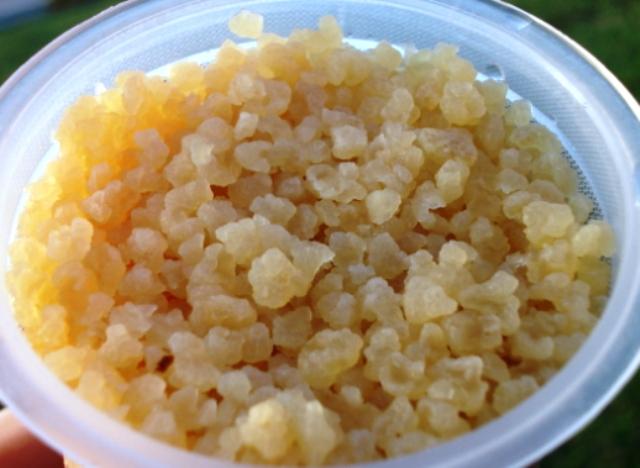 kefir grains. water kefir grains\u2026 grains